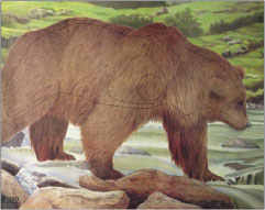Björn måltavla
