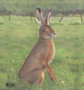 Hare måltavla