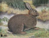 Kanin måltavla