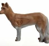 Coyote Prärievarg (Canis latrans)